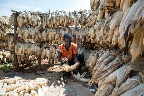 Rwanda: Når matsvinn reduseres, øker inntektene til bøndene