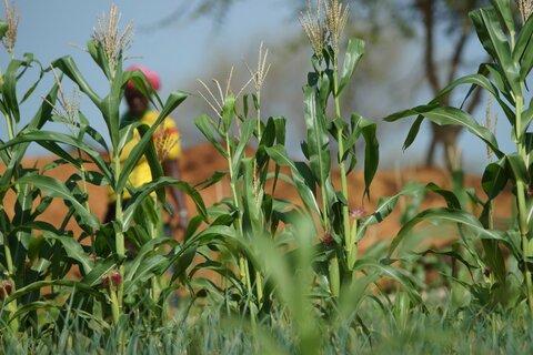 Det sentrale Sahel: Hvordan fred kan spire fra rehabilitert jord